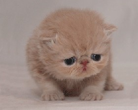 Bands splitting up make this cat cry