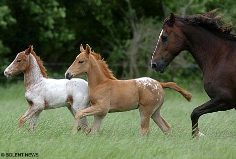 Small horses that play the ukulele? LOL