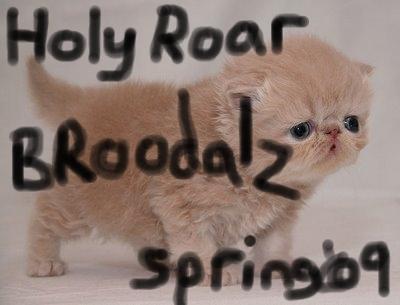 Photo of kitten taken BEFORE it heard this compilation.